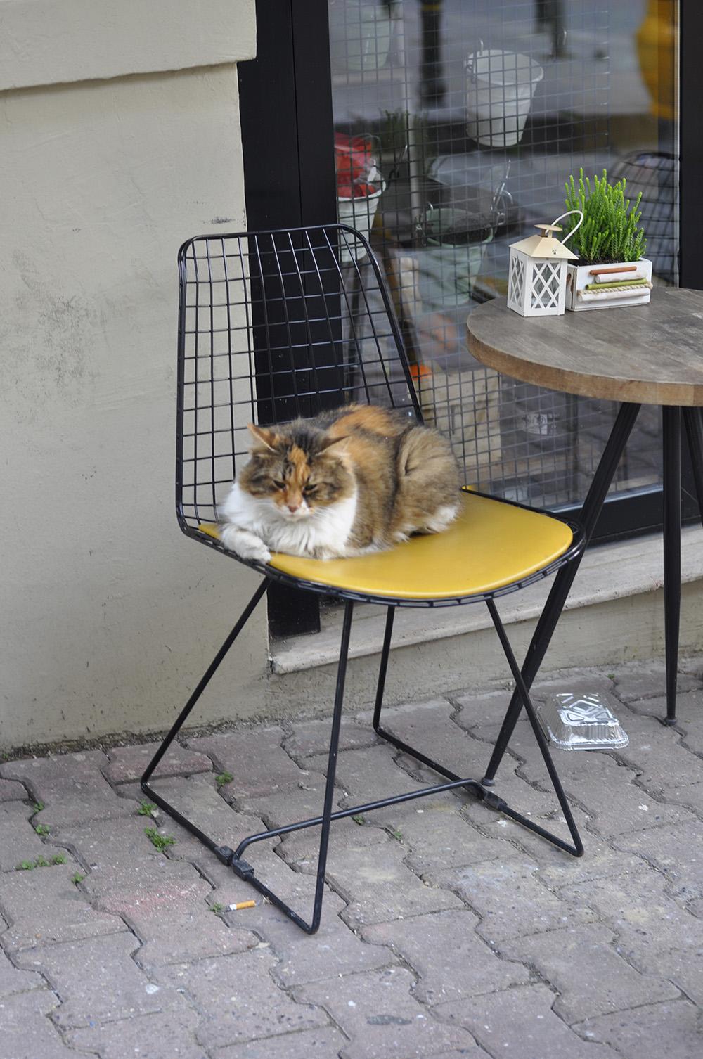 Un gato a sus anchas en una de las cafeterias de Bakraç Sk